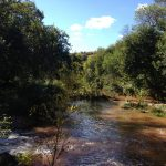 Two Arizona Vineyards Give Back to a River through a Voluntary Water Exchange