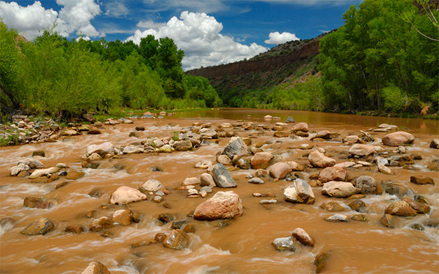 An Oasis in the Desert - Restoring the Verde River