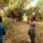 Yellow-billed Cuckoo Survey Training