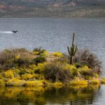 Reservoirs that supply water to Phoenix area nearly full after wet winter
