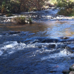 Earth Notes: Verde River Friendly Living Certification