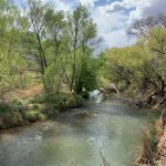 """""""Dry wells, lower flows raise alarm about the Verde River's future"""""""